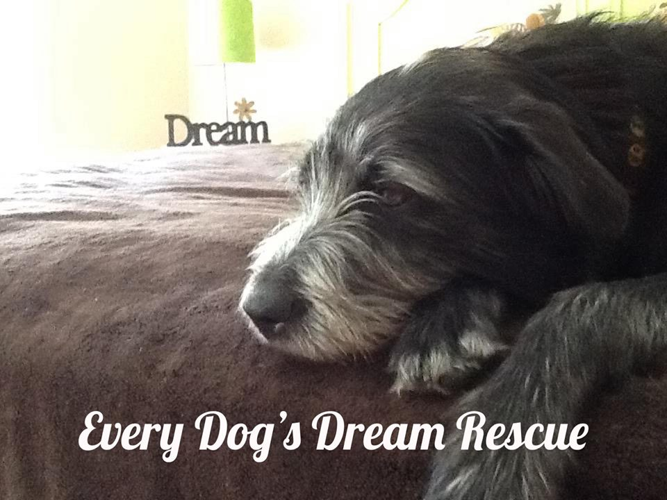Every Dogs Dream 2