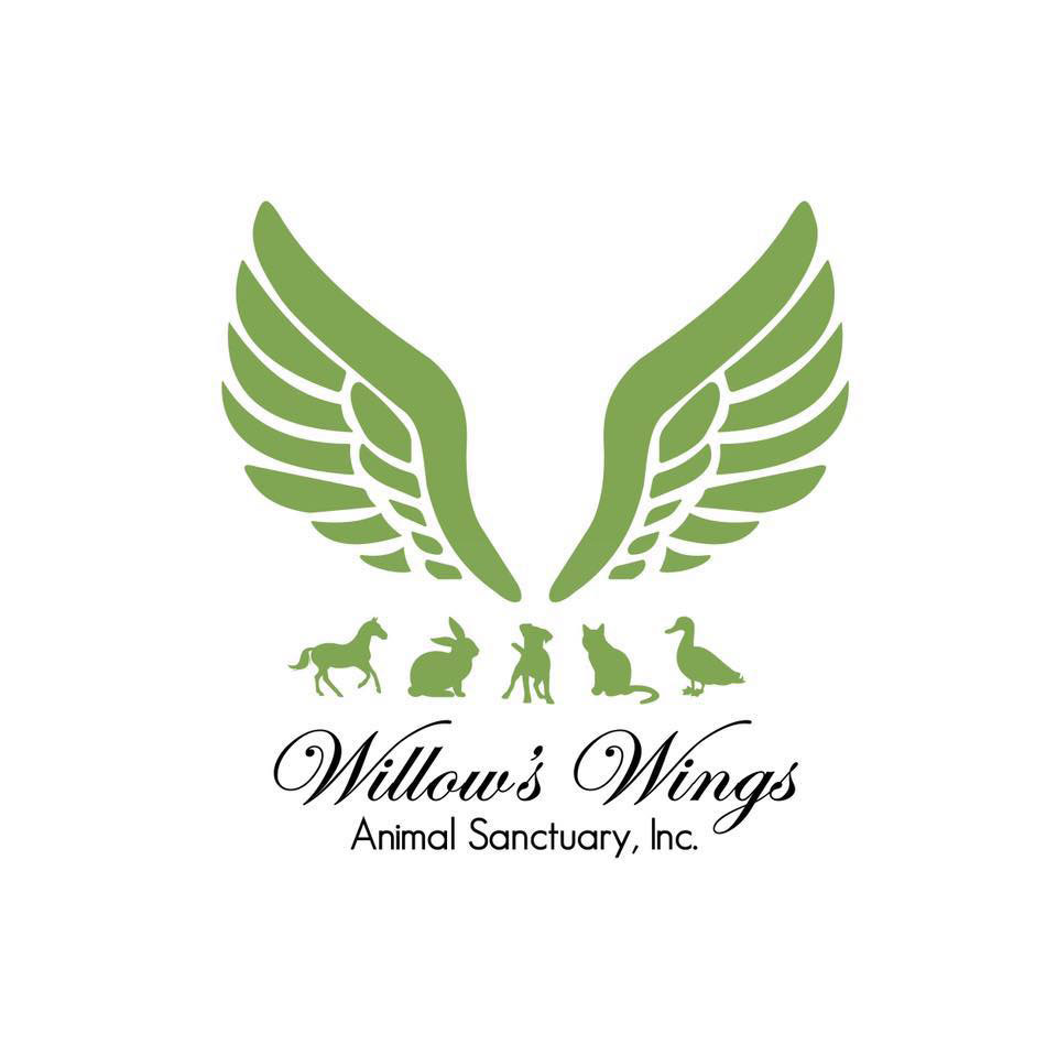 Willow's-Wings-2